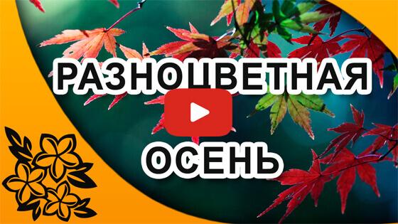 разноцветная осень видео
