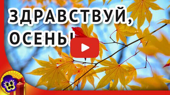 здравствуй осень видео