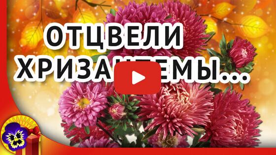 Отцвели уж давно хризантемы видео