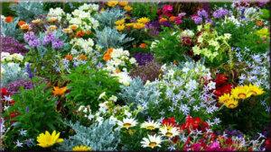 футажи цветочные