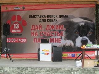 Выставка собак-ищу дом для собаки