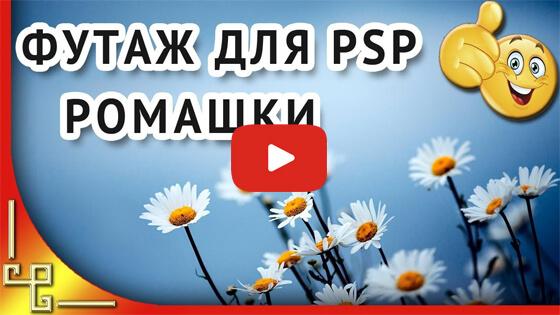 Футажи цветы ромашки видео