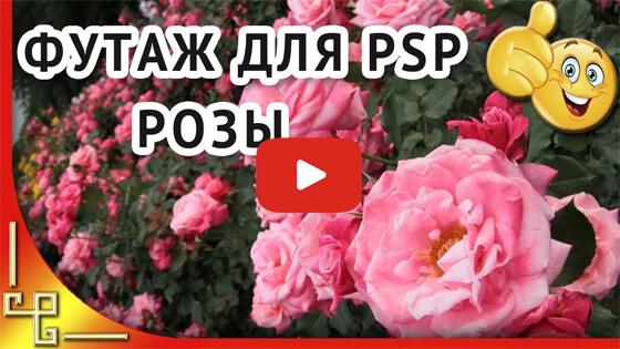 4 футажа с розами видео