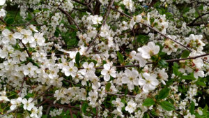 Рязань весна в городе