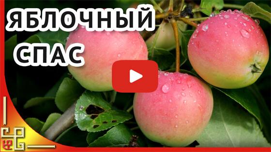Поздравляю с Яблочным Спасом видео