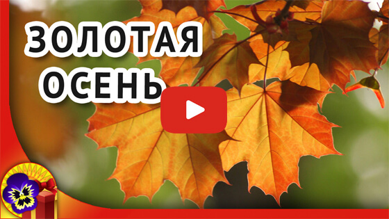 Золотая осень видео