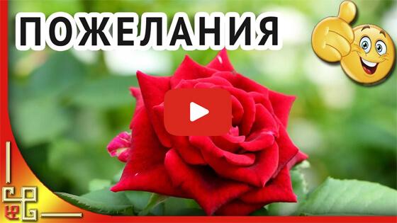Прекрасной женщине прекрасные цветы видео