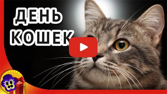 День кошек в России видео