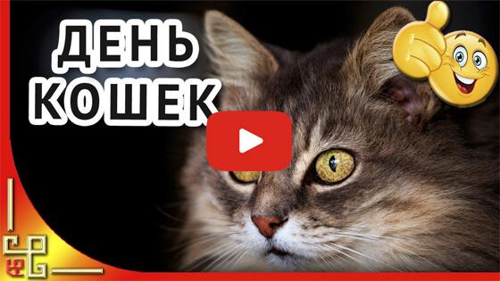 День кошек и котов видео