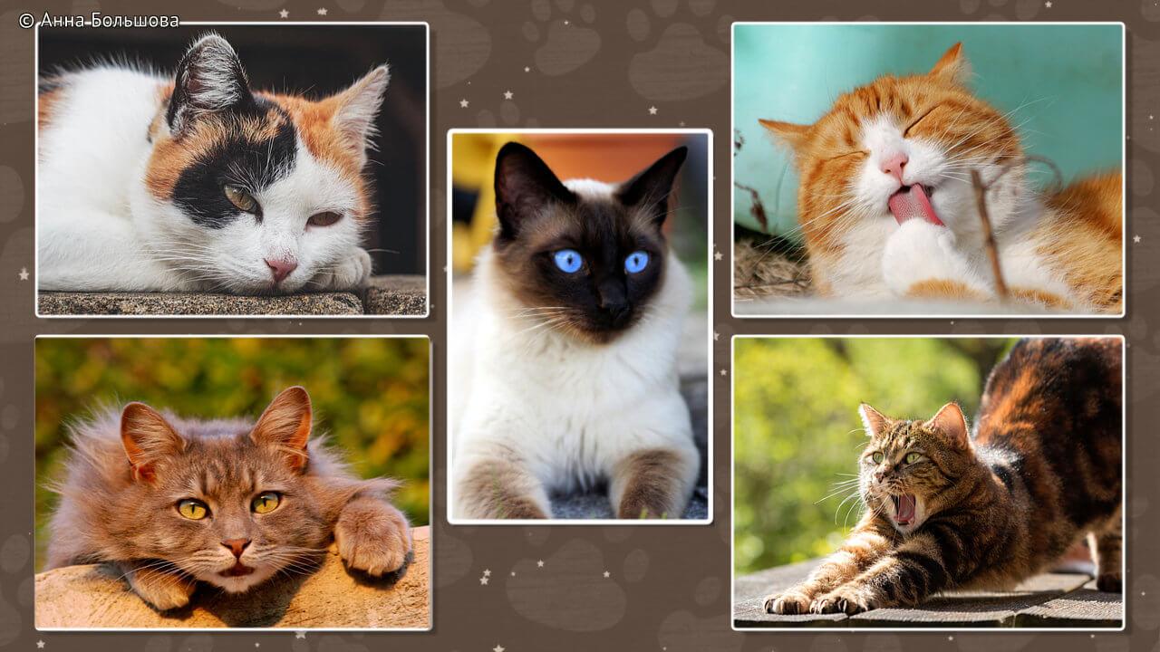 День кошек и котов