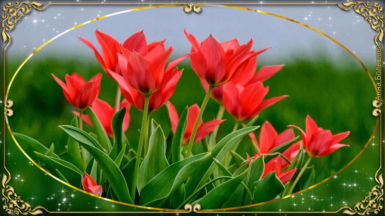 Все цветы для тебя!