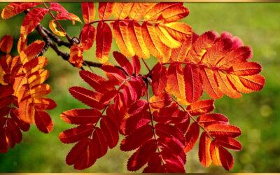 Жизнь похожа на позднюю осень….